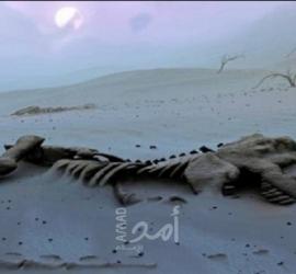 العثور على بقايا نوع جديد من الديناصورات في المغرب عاشت منذ 168 مليون سنة