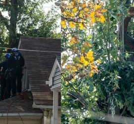 مطاردة طريفة.. رجل يختبئ 3 أيام أعلى شجرة هربا من الشرطة