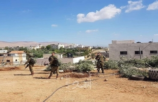 مستوطنون يقتلعون نحو 100 شجرة زيتون شمال غرب الخليل