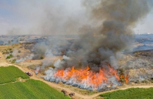 محدث ..إعلام عبري: اندلاع عدة حرائق في أحراش بلدات إسرائيلية بفعل بالونات حارقة