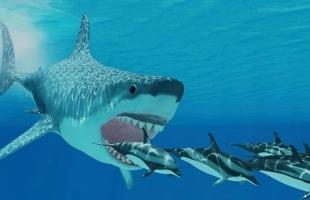 انقراض أكبر سمكة قرش في العالم