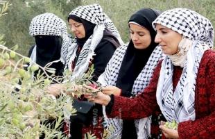 غزة: مجلس العمال يٌنفذ مبادرة جني ثمار الزيتون بمحافظة رفح