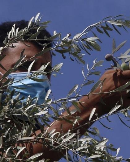 """إصابات واعتقالات خلال منع جيش الاحتلال عددًا من المتطوعين من الوصول لمنطقة """"الرأس"""" بسلفيت"""